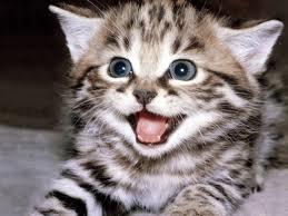 Surprise Face!